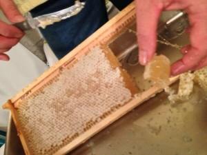 Cầu ong trước khi quay mật