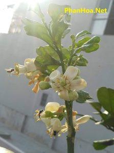 ong lấy phấn hoa