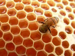 Mật ong được cho vào bánh tổ